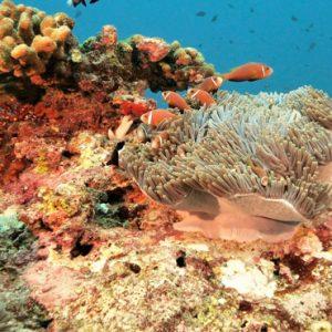 Coral Reef Hard Rock Hotel Maldives Maldives Honeymoons