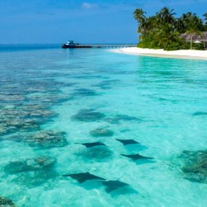 Maldives Honeymoon Packages Baglioni Maldives Resorts Stingrays In Ocean