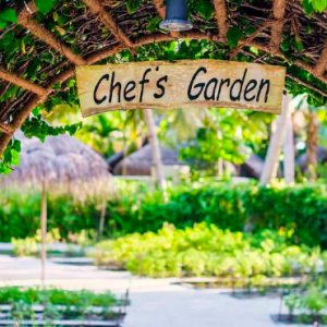 Maldives Honeymoons Anantara Dhigu Maldives Resort Chef's Garden