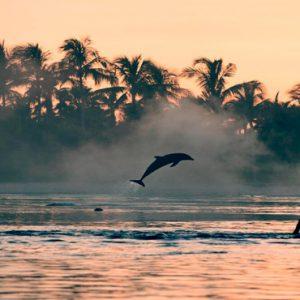 Dolphin Cay The Cove At Atlantis Bahamas Honeymoons