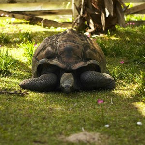 Hilton Seychelles Labriz Resort & Spa - Luxury Seychelles Honeymoon Packages - Tortoise