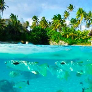 Lagoonarium - InterContinental Bora Bora Resort and Thalasso Spa - Luxury Bora Bora honeymoon Packages