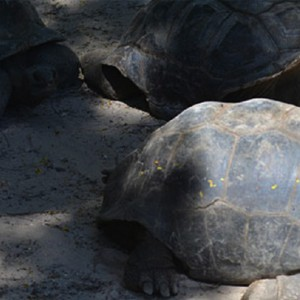 Banyan Tree Seychelles - Luxury Seychelles Honeymoon Packages - Tortoises