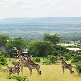 honeymoons in Africa