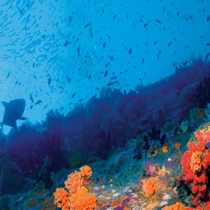 Constance Le Prince Maurice - Luxury Mauritius Honeymoon Package - diving