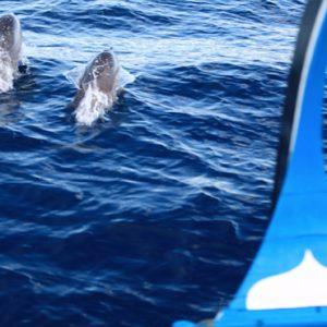 Maldives Honeymoon Packages Six Senses Laamu Dolphin Cruise