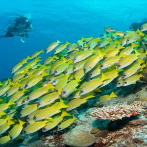 Maldives Honeymoon Packages Six Senses Laamu Watersports1