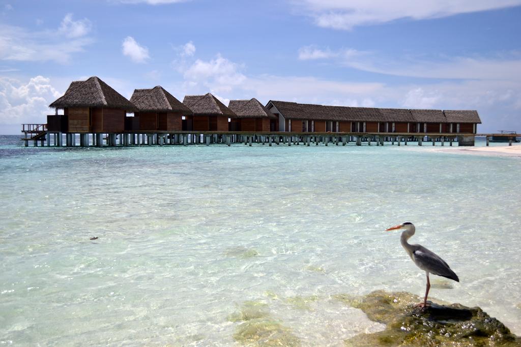 Water-villas-kandolhu-island-maldives