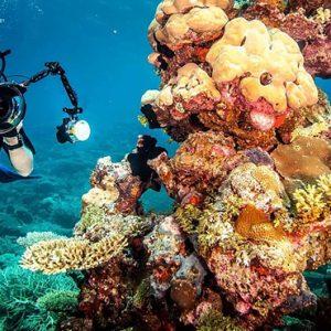 Coral Reefs Ayada Maldives Maldives Honeymoon Packages
