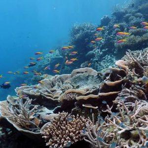 Diving Ayada Maldives Maldives Honeymoon Packages
