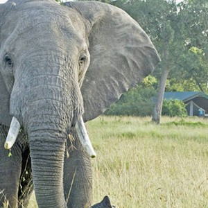 Governors Main Campt - Kenya Honeymoon Packages - elephant