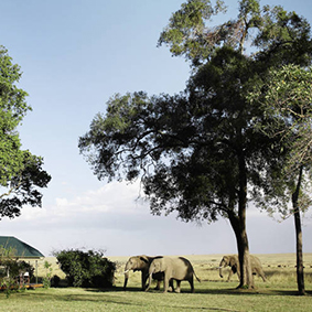 Governors Main Campt - Kenya Honeymoon Packages - thumbnail