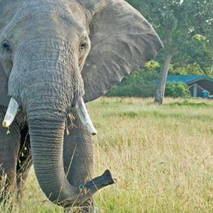 South Africa Honeymoon Packages Governors Camp, Kenya Elephant In Safari