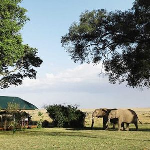 South Africa Honeymoon Packages Governors Camp, Kenya Elephants Come To Bar