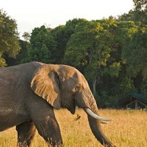 South Africa Honeymoon Packages Governors Camp, Kenya Elephants In Safari1