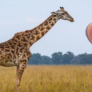 South Africa Honeymoon Packages Governors Camp, Kenya Giraffe Hot Air Balloon