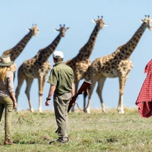 South Africa Honeymoon Packages Governors Camp, Kenya Giraffes