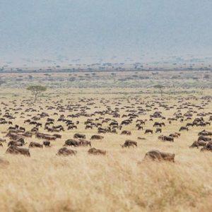 South Africa Honeymoon Packages Governors Camp, Kenya Safari View