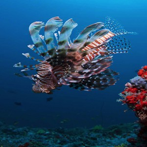 Maldives Honeymoon Packages Biyadhoo Island Diving