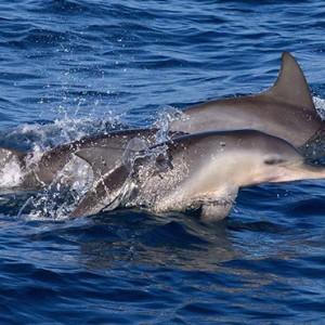 Maldives Honeymoon Packages Biyadhoo Island Dolphin Watching
