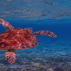 Maldives Honeymoon Packages Biyadhoo Island Marine Life