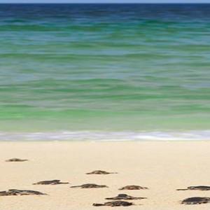 Oman Honeymoon Packages Al Waha At Shangri La Barr Al Jissah Resort And Spa Turtle Hatchings