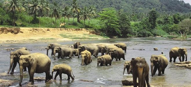 sri-lanka-blog