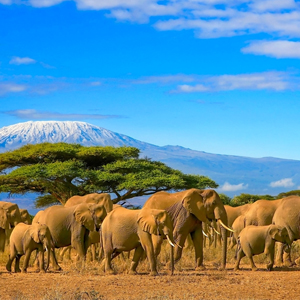 Kenya Honeymoon Packages When To Go On Honeymoon In Kenya