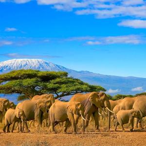 Kenya Honeymoon Packages When To Go On Honeymoon In Kenya