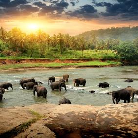 Sri Lanka Honeymoon Packages When To Go On Honeymoon In Sri Lanka