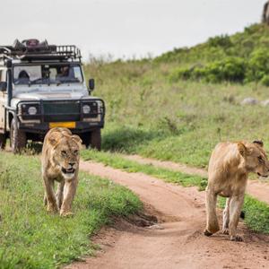 Tanzania Honeymoon Packages When To Go On Honeymoon In Tanzania