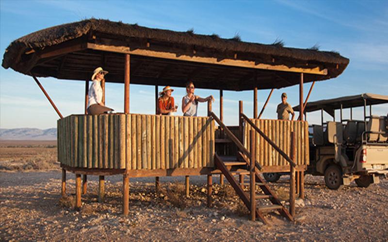 Safari Day Safari In Cape Town South Africa Honeymoons