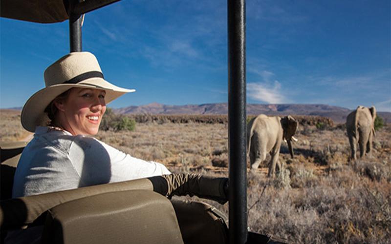 Safari1 Day Safari In Cape Town South Africa Honeymoons