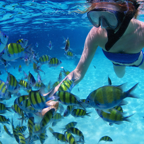 Thumbnail Snorkelling In Barbados Barbados Honeymoons