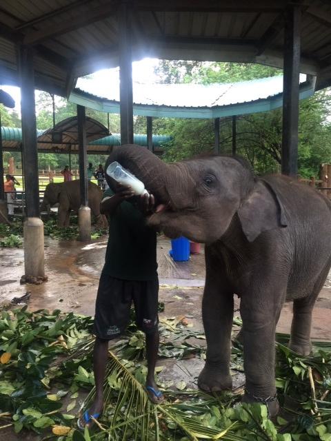A honeymoon at Centara Ceysands Resort and Spa Sri Lanka - A Day In Kandy2