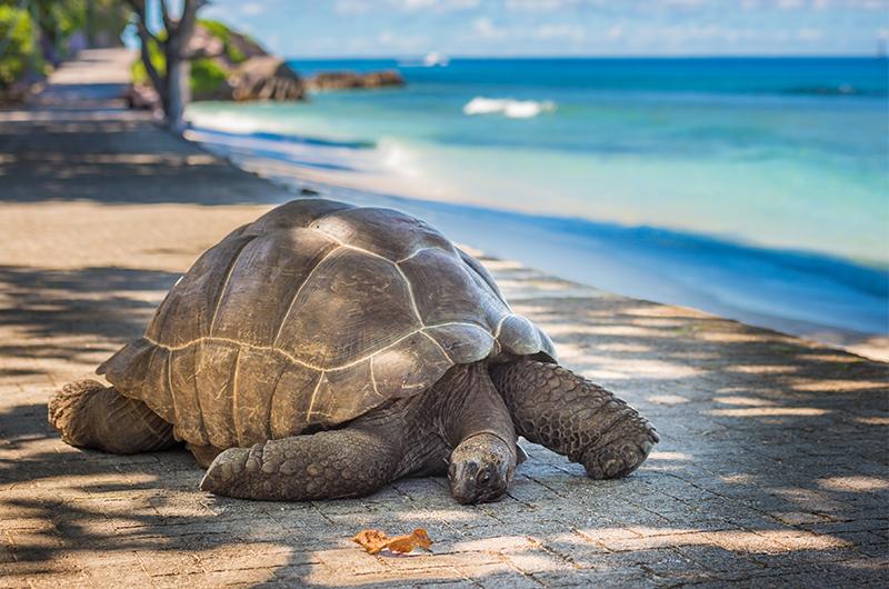 Top-10-luxury-honeymoons-2016-and-2017---honeymoon-dreams---seychelles-