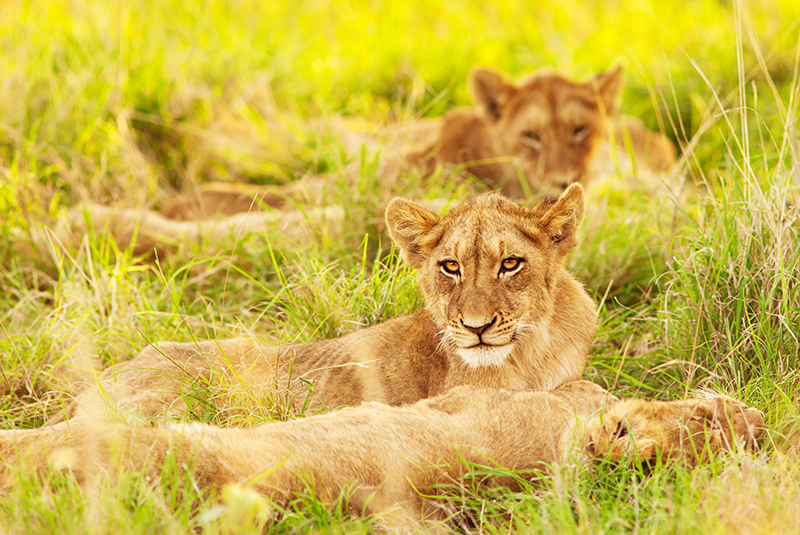 Full Day Kruger National Park Open Vehicle Game Drive - Safari