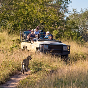 Full Day Kruger National Park Open Vehicle Game Drive - Thumbnail