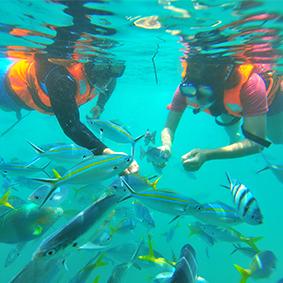 Pulau Payar Marine Park from Penang Private Tour - Malaysia Honeymoon - Thumbnail