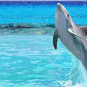 Swim With Dolphins Miami