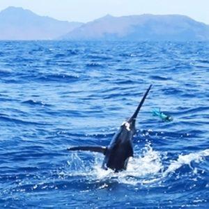 Big Game Fishing Cinnamon Dhonveli Maldives Honeymoons