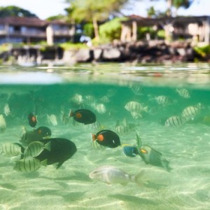 Hawaii Honeymoon Packages Four Seasons Hualalai Hawaii Big Island Snorkeling