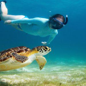 Turtle And Manta Snorkelling Cinnamon Dhonveli Maldives Honeymoons