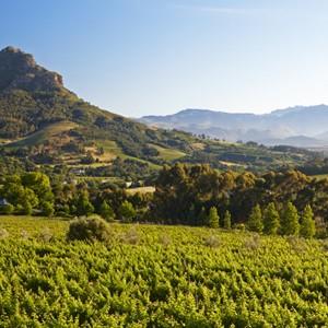Greenery - Clouds Estate - Luxury South Africa Honeymoons