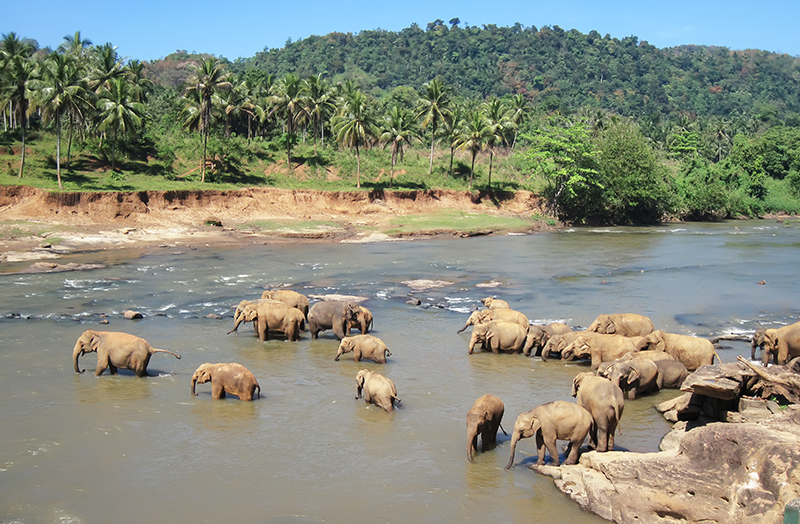 Yala National Park - Amazing places to see in Sri Lanka - Sri Lanka honeymoon ideas