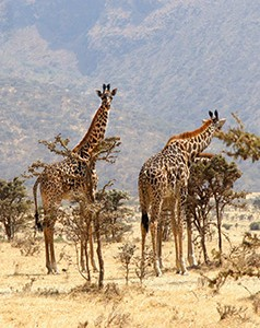 Botswana 1- Safarimoons