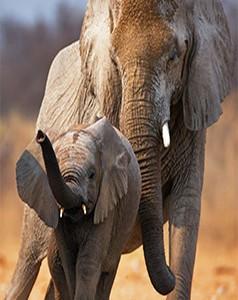 South Africa - Safarimoons