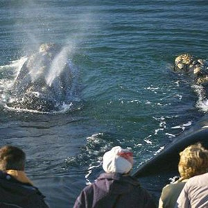 The Marine - South Africa Honeymoon Packages - Sea activities