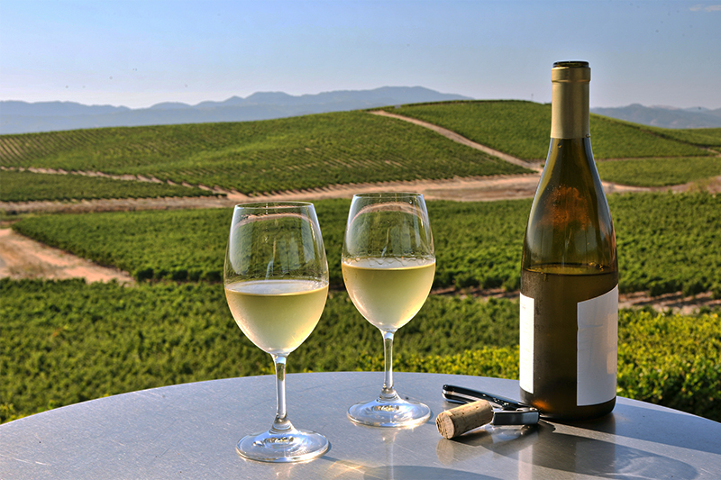 san-francisco-vineyards-blog1