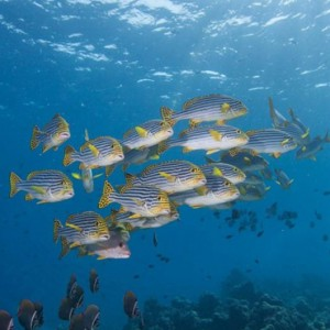 paddle-board-hurawaihi-luxury-maldives-honeymoon